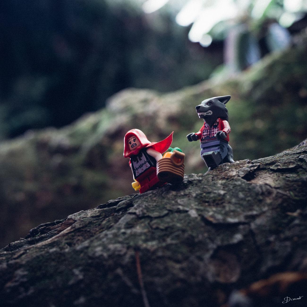 Wolf Loupgarou Chaperonrouge Le Petit Chaperon Rouge Red Riding Hood Frightnight