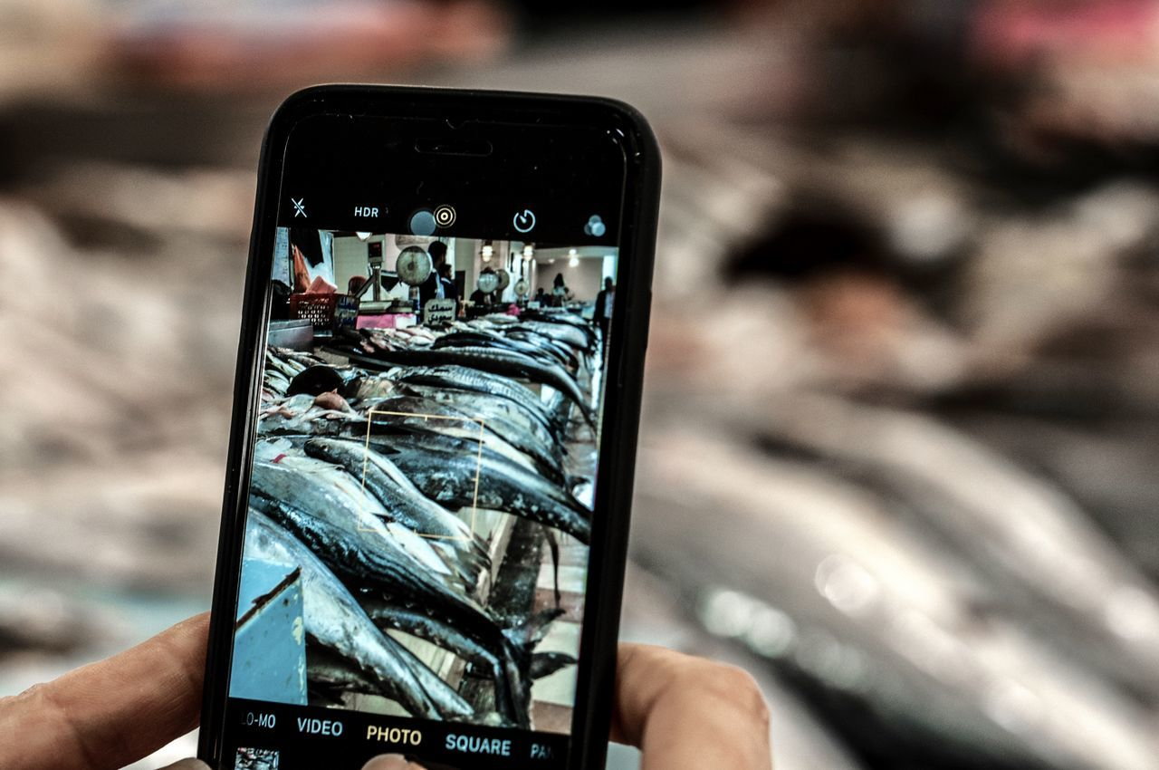 Fish Fish Market Fishy Mobile Conversations Mobile Photography Mobilephotography in Kuwait Mobilephoto Worldwide