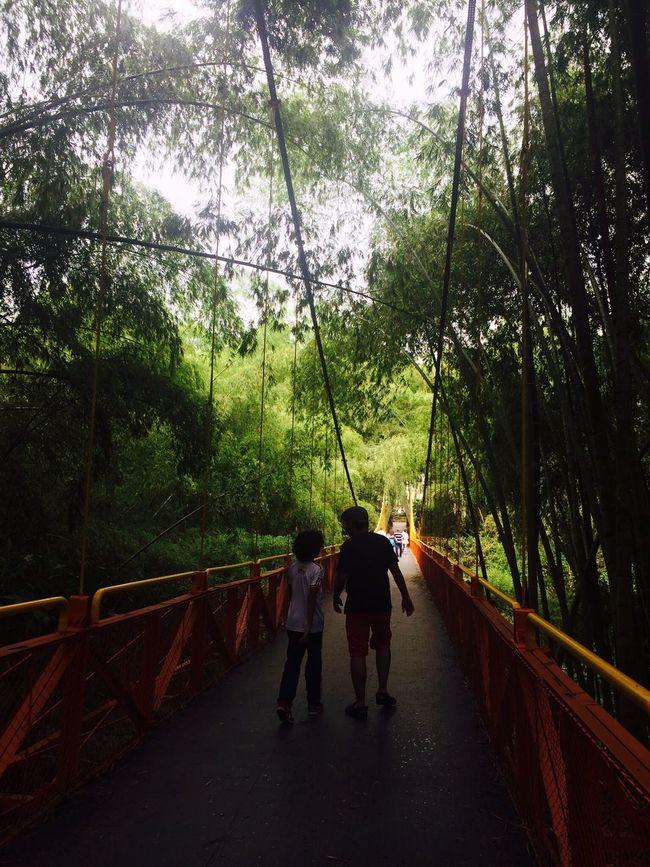 Colombiaa Nature Parque Nacional Del Cafe