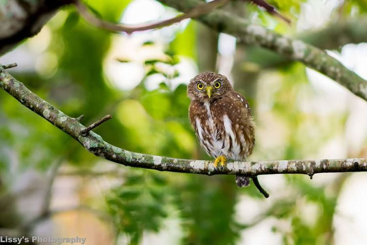 Nature Animal Themes Branch One Animal Owl Selective Focus Owl Eyes