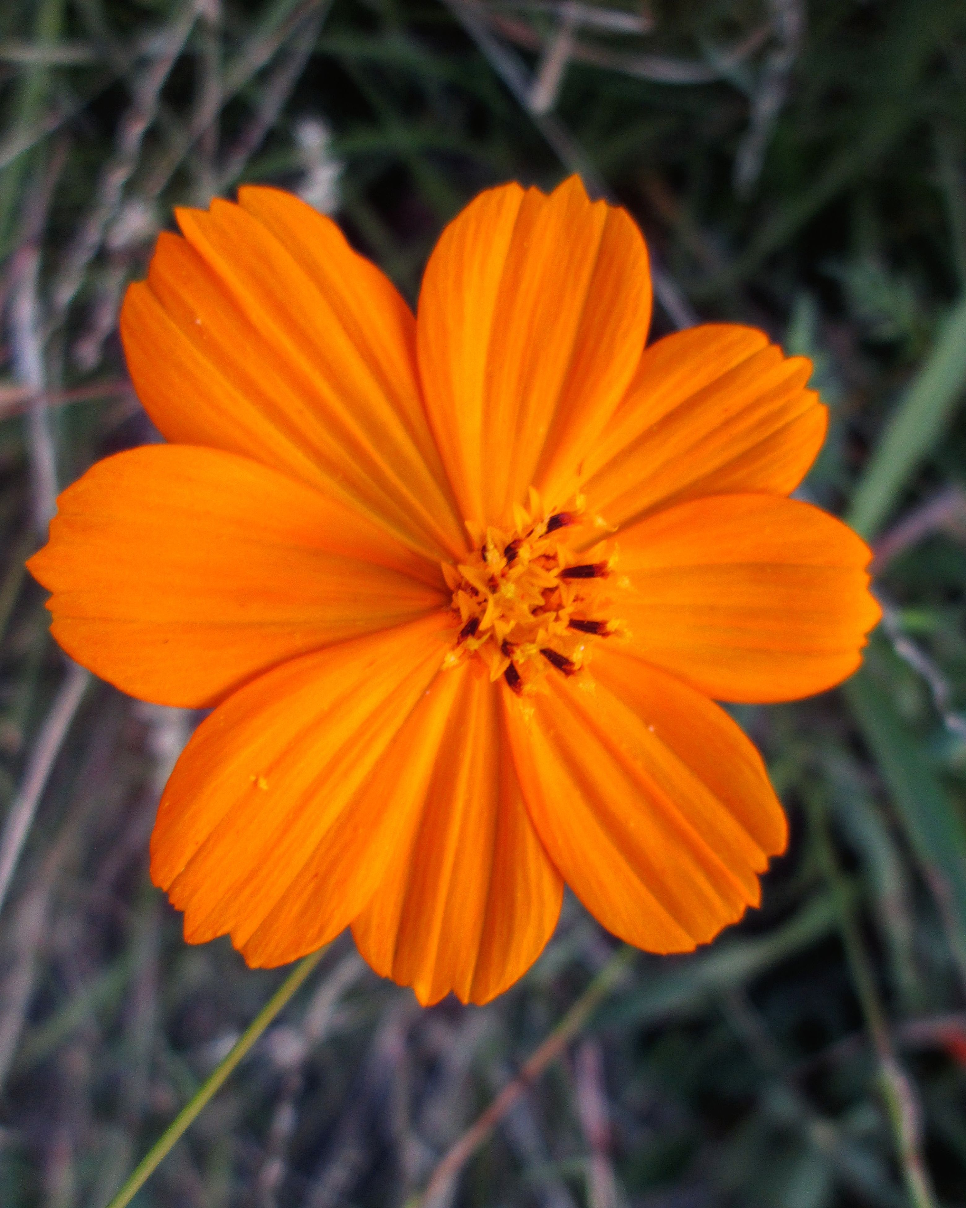 flower, petal, freshness, fragility, flower head, orange color, close-up, growth, focus on foreground, beauty in nature, pollen, nature, blooming, yellow, stamen, plant, single flower, in bloom, outdoors, no people