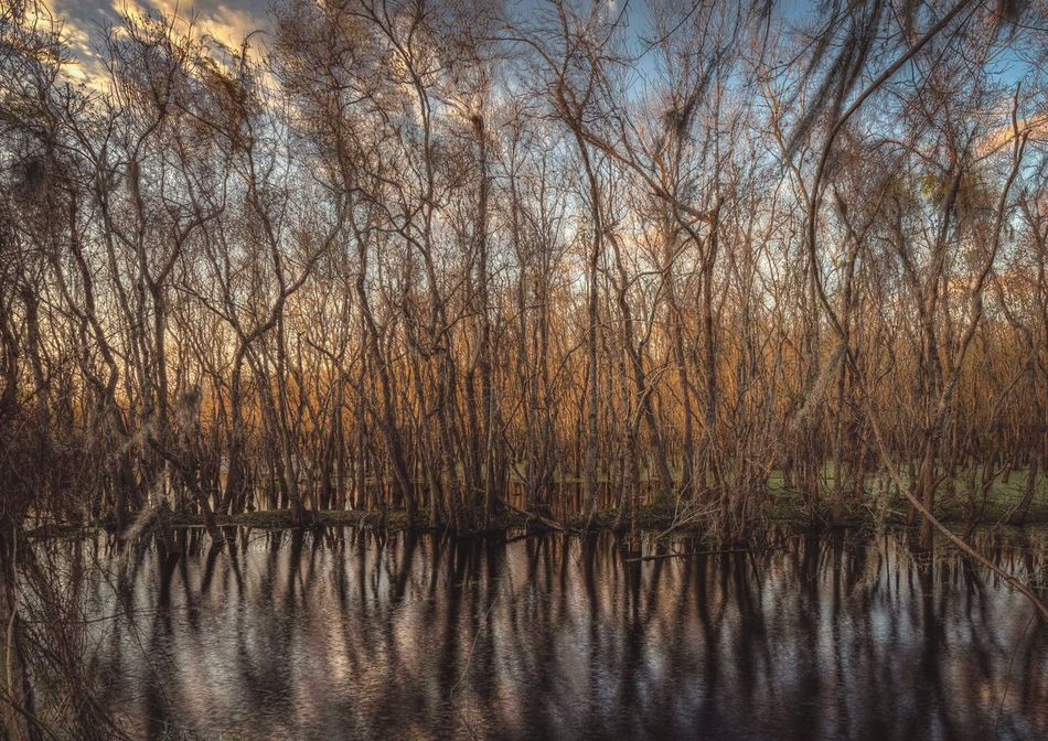Water Reflections at Brazos Bend State Park in Texas TreePorn The Great Outdoors - 2016 EyeEm Awards Wetland Trees Beauty In Nature Houston Texas State Parks Nature Photography EyeEm Nature Lover Reflections In The Water Forest Everyday Life No People EyeEm Best Shots - Nature United States The South