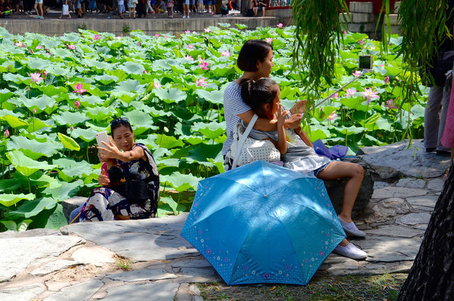 Beijing China Family Green Color Leisure Activity Lifestyles Lotus Pond Photographing Smmer Umbrella
