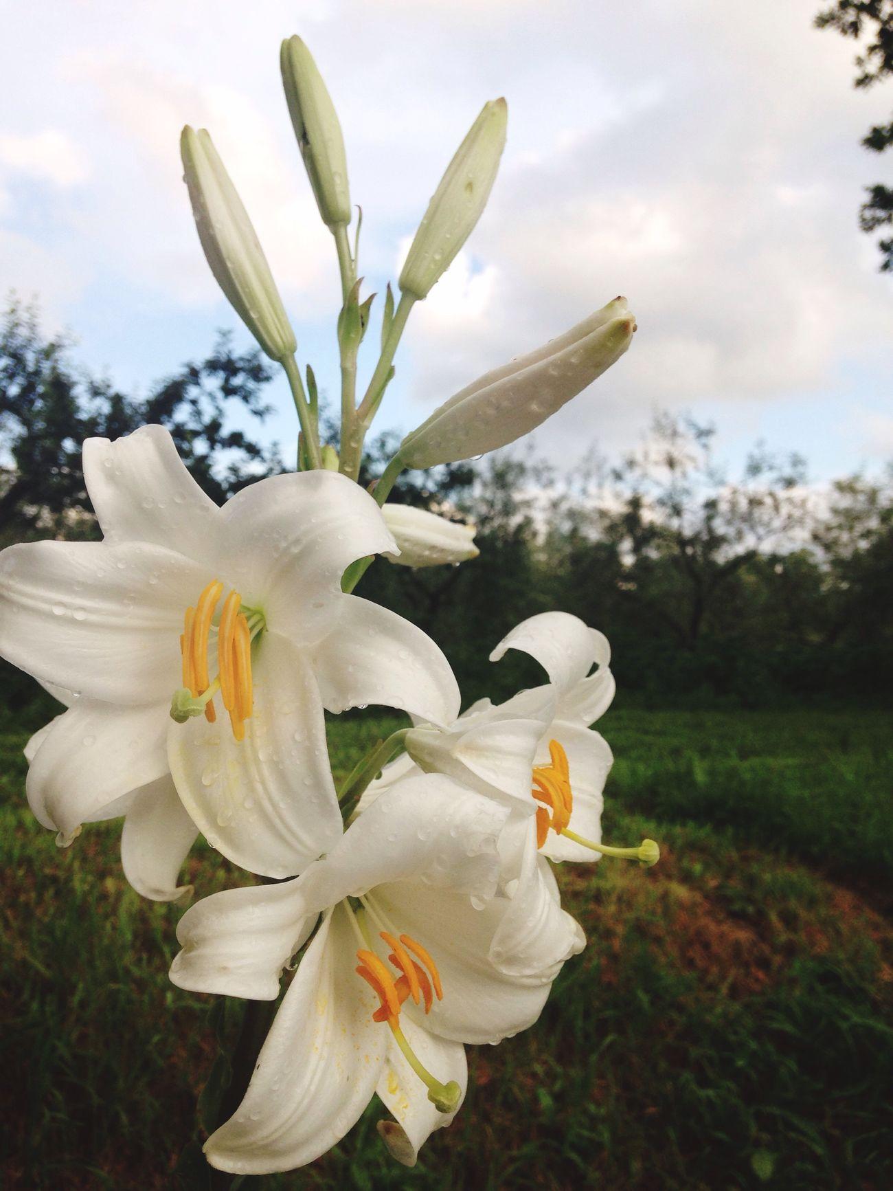 Flowers Flower White Nature