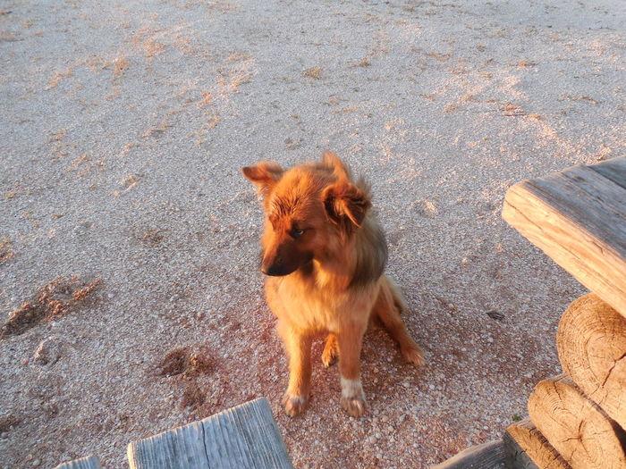 nice she-dog EyeEm Selects Dog Domestic Animals Pets High Angle View Nature Mammal Animal Themes ChaCha Sand Beach Dawn Quiet Moments May Vacations☺️🍹 Vacation Genichesk Schastlivtcevo Azov Sea