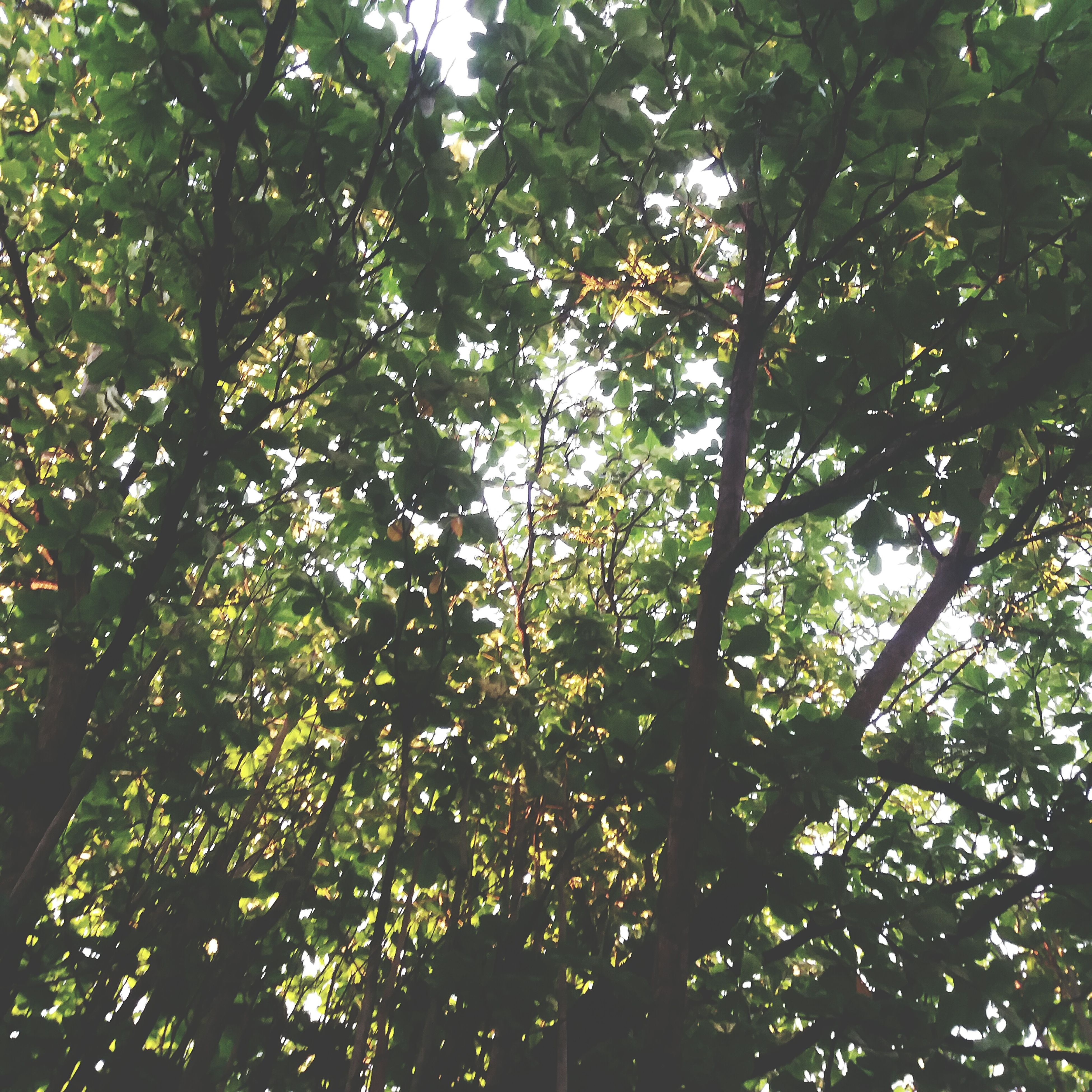 tree, nature, growth, low angle view, backgrounds, beauty in nature, no people, green color, outdoors, tranquility, day, branch, sky, freshness