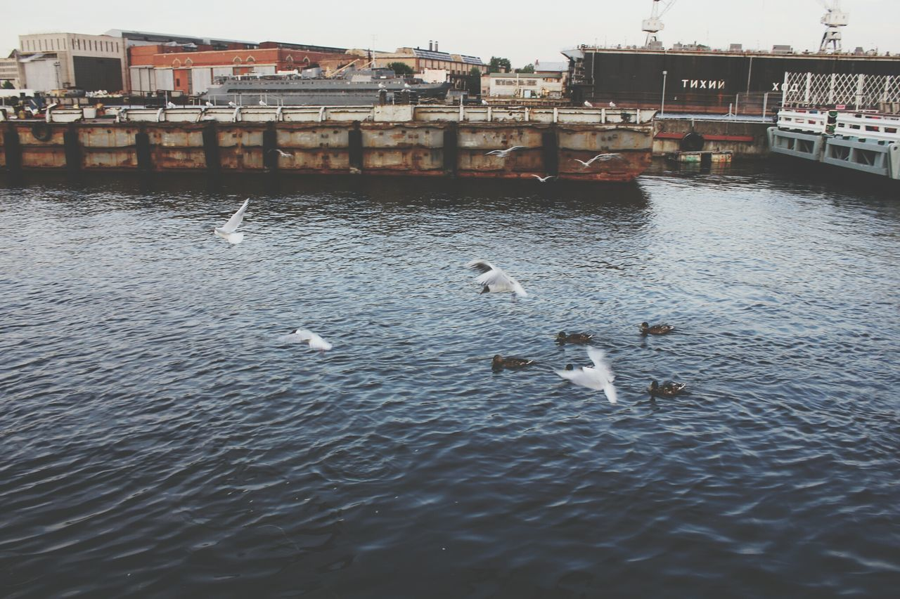water, animals in the wild, animal themes, architecture, bird, waterfront, built structure, building exterior, animal wildlife, day, nature, lake, rippled, outdoors, no people, swimming, swan