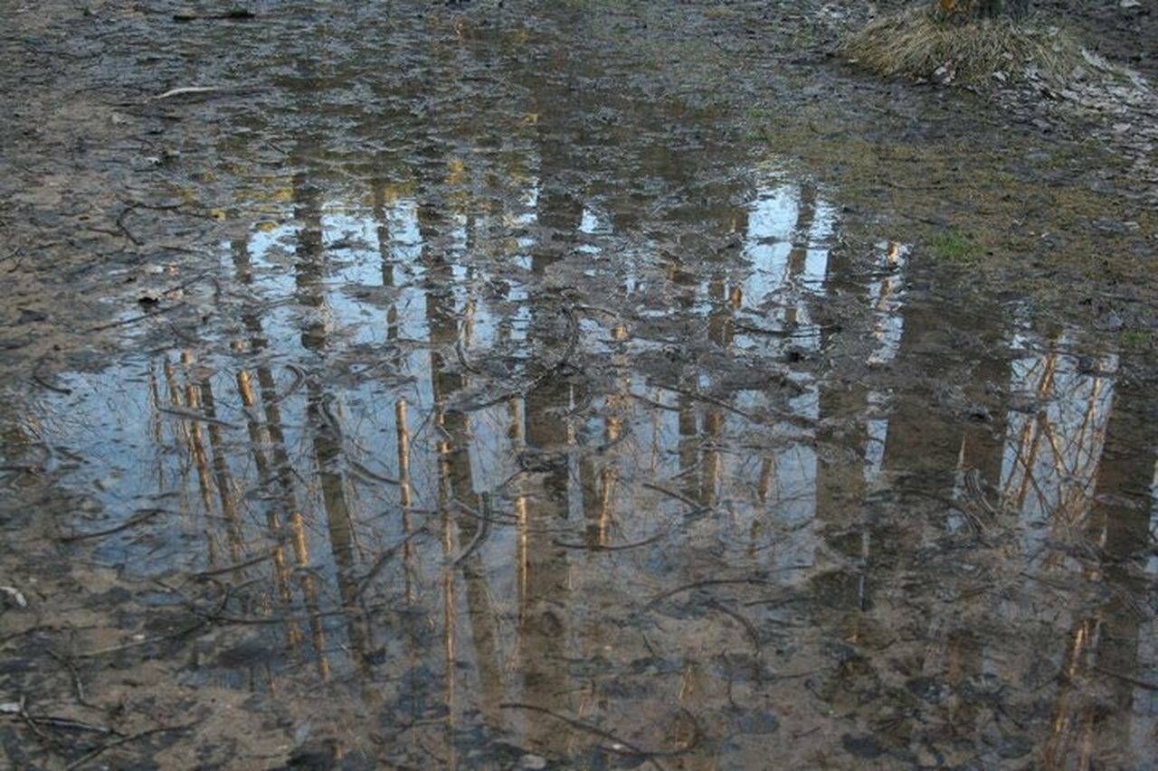 water, nature, no people, day, reflection, outdoors, backgrounds, full frame, tree, close-up