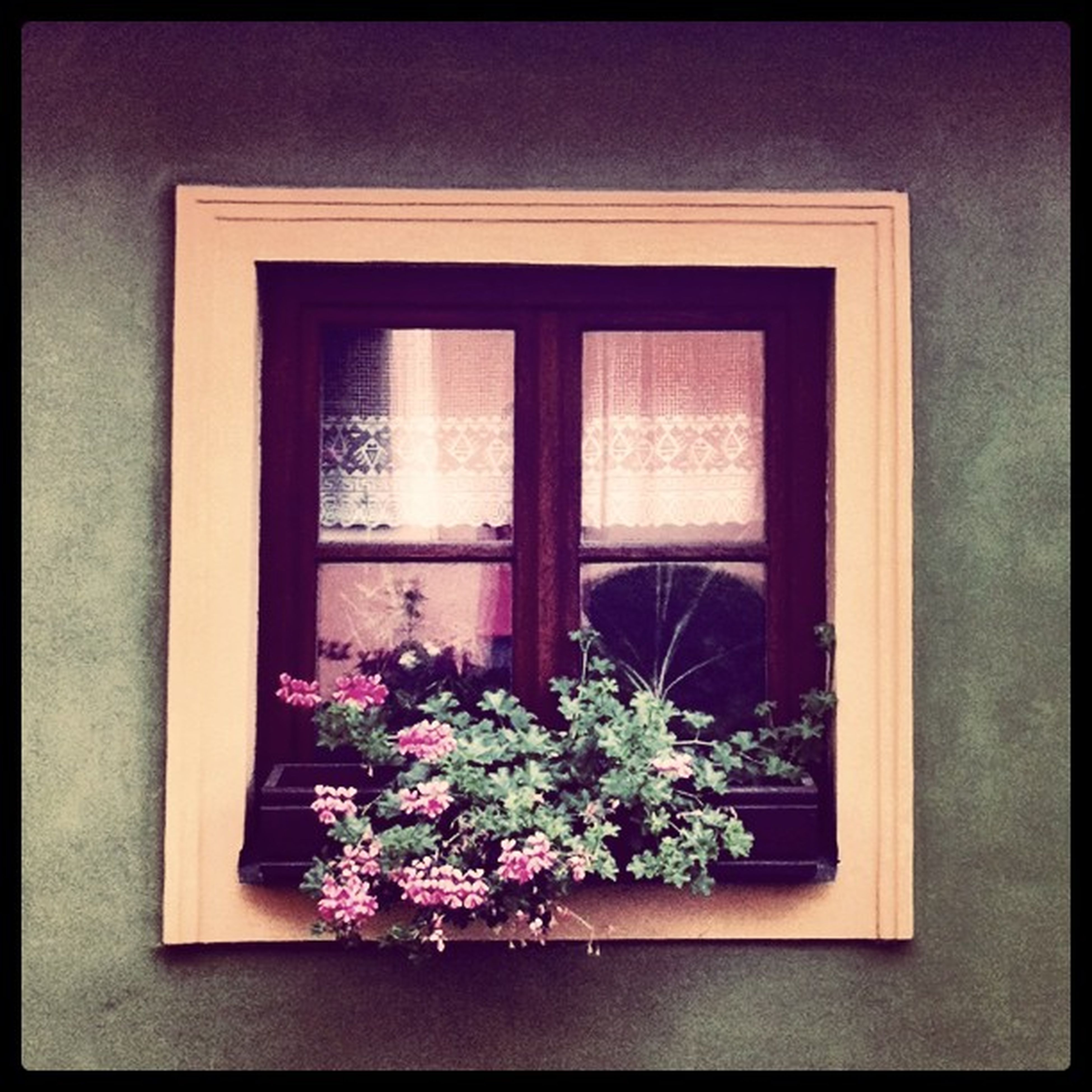 flower, window, growth, potted plant, plant, transfer print, freshness, house, architecture, building exterior, built structure, fragility, auto post production filter, window sill, flower pot, glass - material, nature, no people, beauty in nature, day