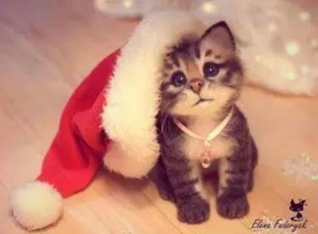 Boldog Karácsonyt mindenkinek! ☺ Cat Happy Christmastime Karacsony Macska