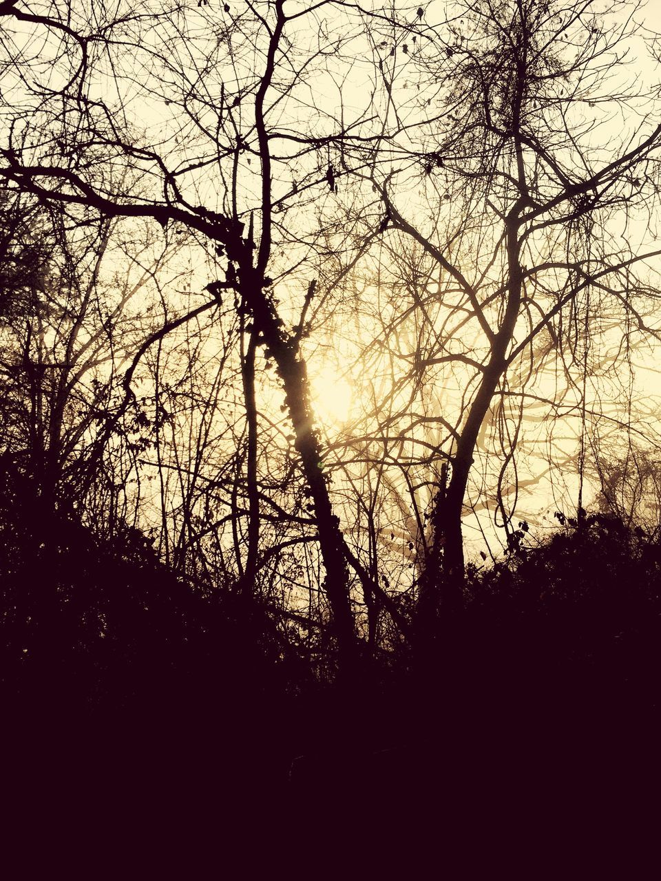 tree, nature, silhouette, beauty in nature, tranquility, forest, no people, outdoors, tranquil scene, branch, scenics, bare tree, landscape, day, sky