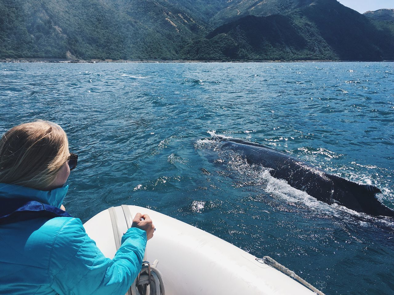 Whale Whale Watching Power In Nature Animal Themes Animals In The Wild Humpback Whale Kaikoura New Zealand Nature