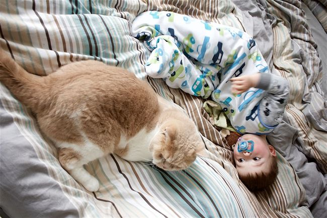 Baby Bed Blanket Cat Cats Domestic Animals Domestic Cat Friendship Looking Relaxation Sleepy Toddler  Toddlers