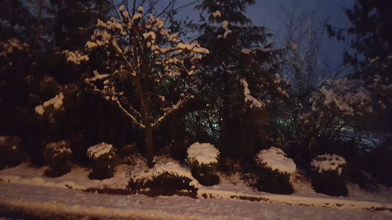 nature, winter, tree, snow, cold temperature, no people, beauty in nature, tranquility, growth, outdoors, plant, scenics, night, sky, close-up
