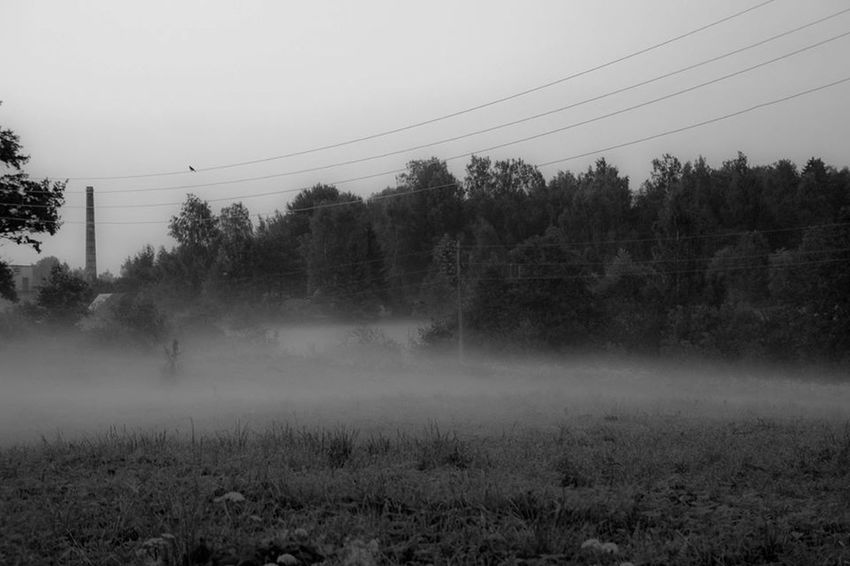 Nature Fog Summer Blackandwhite