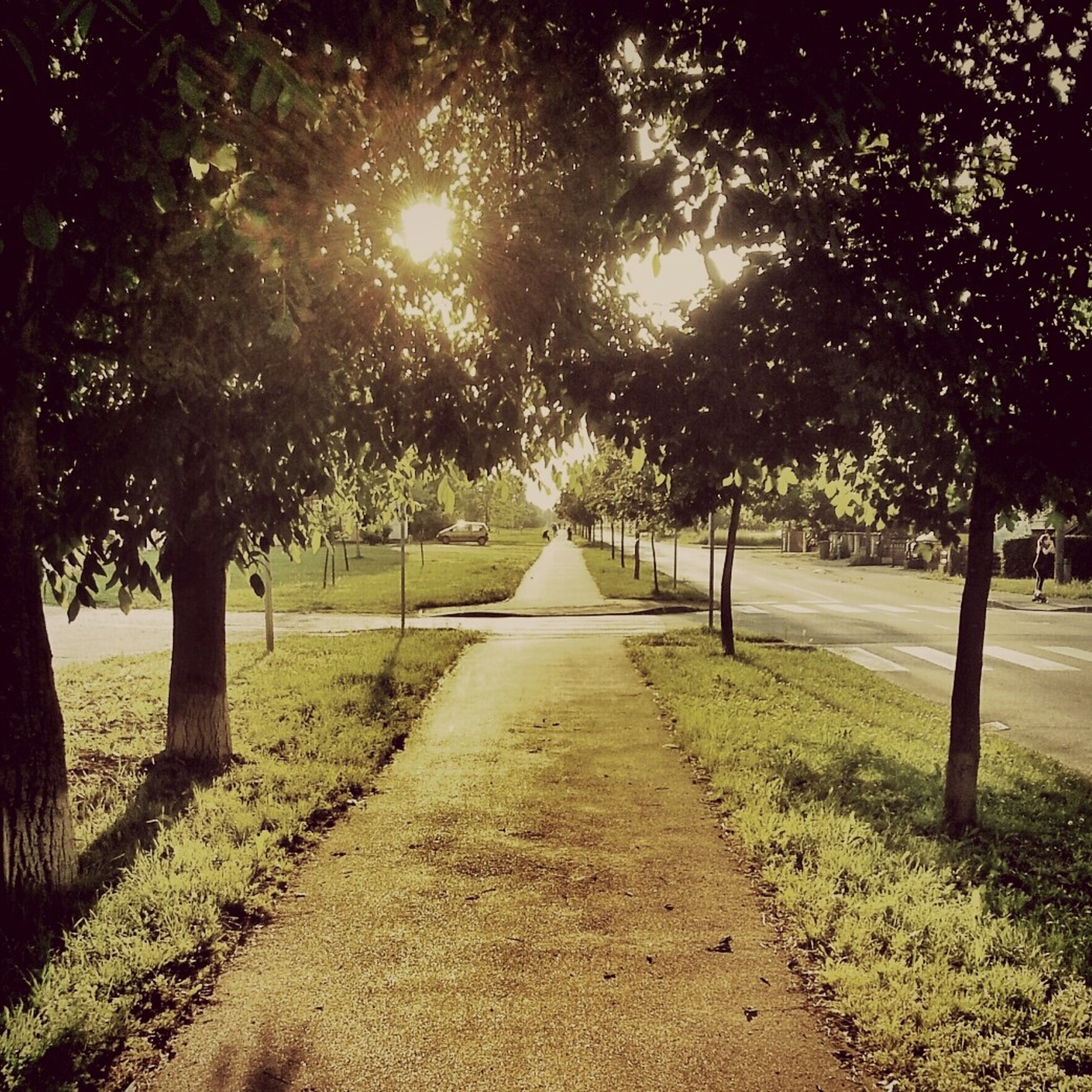 tree, the way forward, tranquility, diminishing perspective, treelined, vanishing point, growth, nature, branch, footpath, tranquil scene, grass, tree trunk, sunlight, beauty in nature, scenics, landscape, park - man made space, field, road