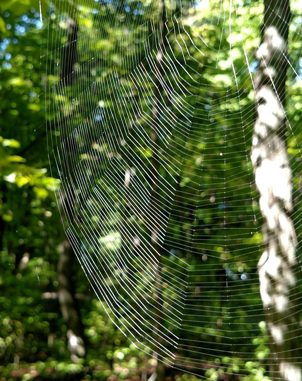 nature, spider web, beauty in nature, focus on foreground, fragility, close-up, outdoors, drop, web, no people, green color, growth, freshness, day, trapped, leaf, water