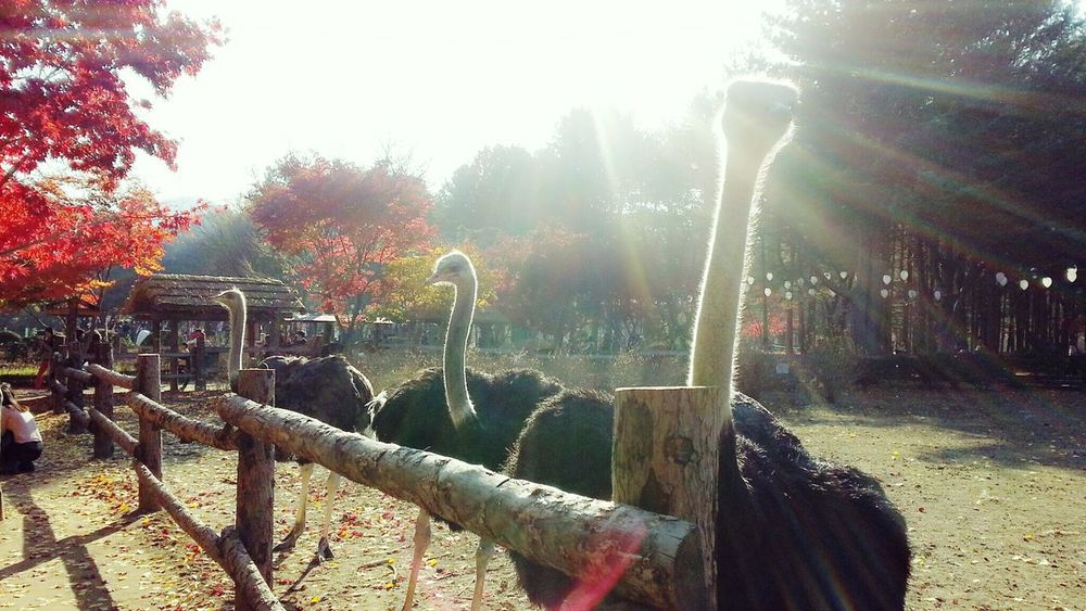 Animal Animal_collection Bird Ostrich Sunshine Autumn Autumn Colors Zoo Zoo Animals  Red