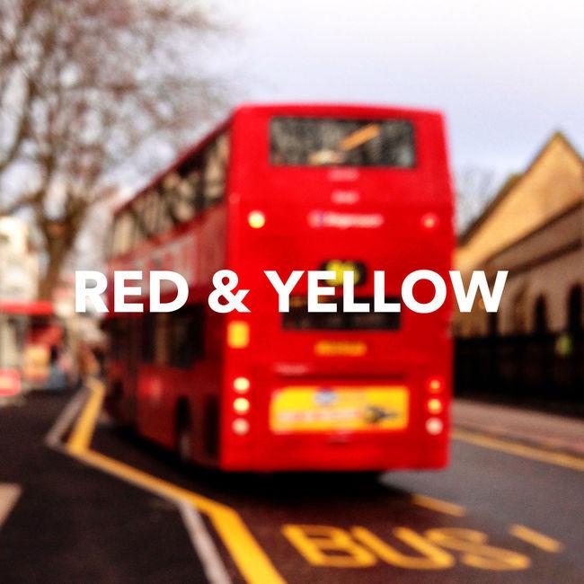 red & yellow tulip Vehova Red Yellow Tulips🌷 Lady Girls