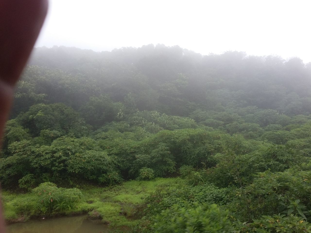 nature, tree, landscape, beauty in nature, plant, growth, fog, day, tranquil scene, tranquility, no people, outdoors, scenics, forest, mountain, freshness, sky