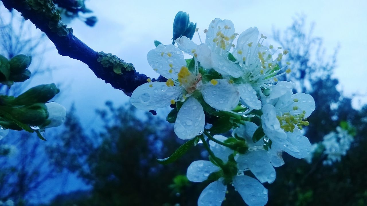 Flowers White Flowers Early Spring, With Plum Flowers Rain Drops EyeEm Nature Lover After The Rain Open Edit
