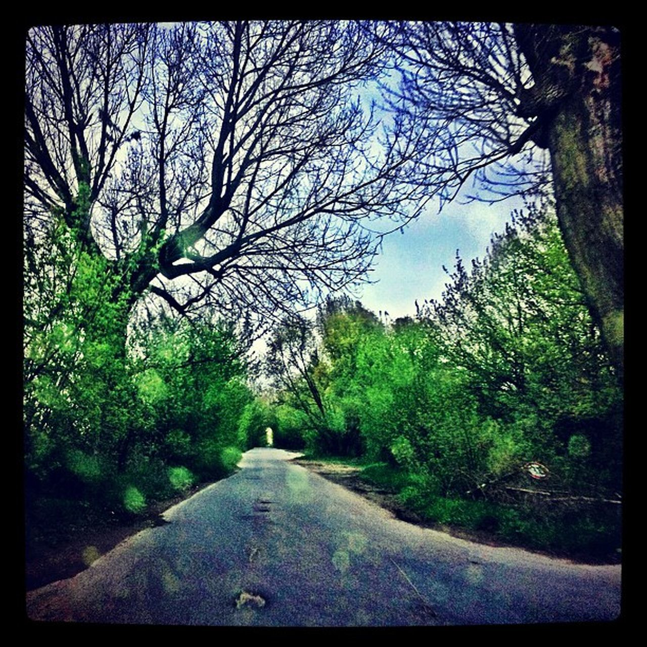 tree, branch, day, nature, tranquility, forest, outdoors, no people, bare tree, road, landscape, growth, scenics, sky, beauty in nature