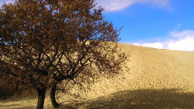 Tree Desert Loneliness Landscape Nature Tranquil Scene France Empty Rural Scene Tranquility Day Season  No People Dune Du Pyla Dune Du Pilat Arcachon Winter