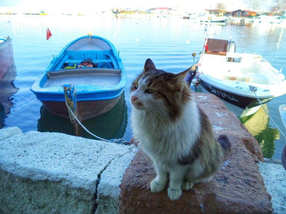 Taking Photos Cat Lovers Cat Streetphotography Hello World Relaxing Benimgözümden Kadrajturkiye Fotografheryerde Animal Photography Sea And Sky Benimgözünden Bursa / Turkey Istanbuldayasam