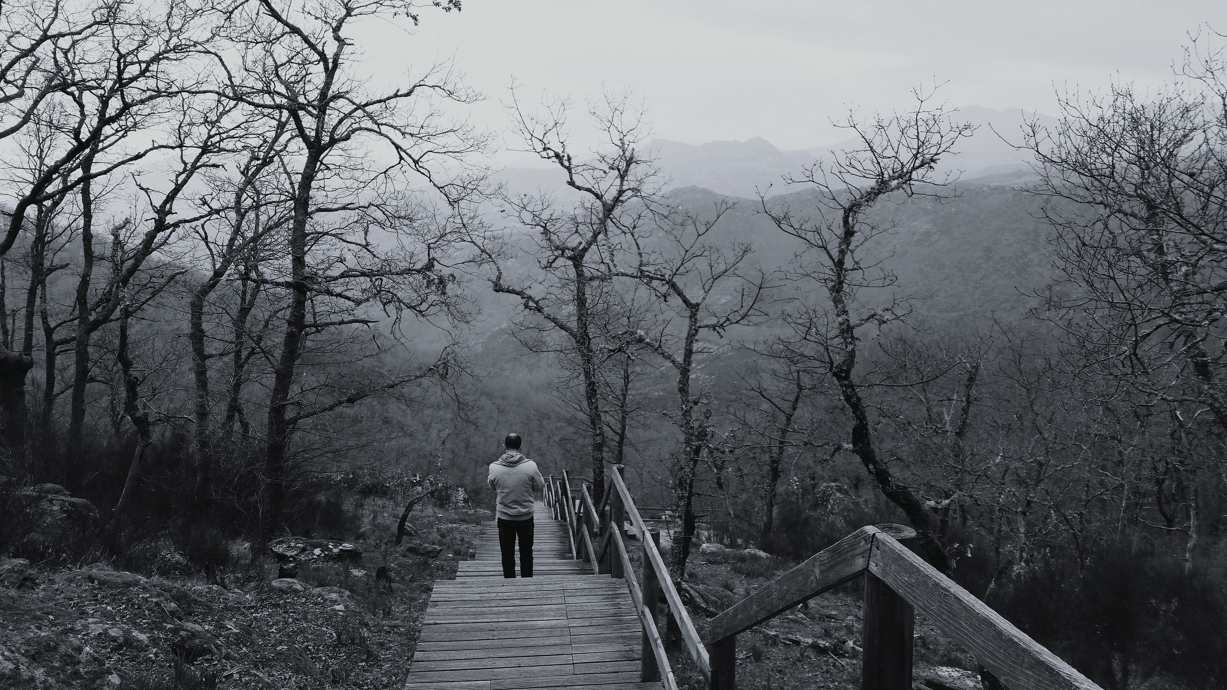 tree, bare tree, rear view, railing, walking, branch, tranquility, tranquil scene, scenics, full length, beauty in nature, walkway, nature, day, footpath, mountain, fog, the way forward, non-urban scene, outdoors, foggy, mountain range, solitude