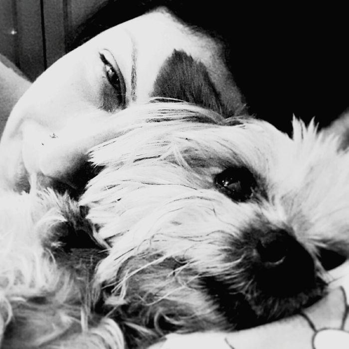 Pets Domestic Animals Portrait Mydog♡ MyFriend♡ I Love My Dog Self Portrait Yorkshire Happy IloveIT ♡ Mylife❤ Happness Confort Rio De Janeiro, Brazil