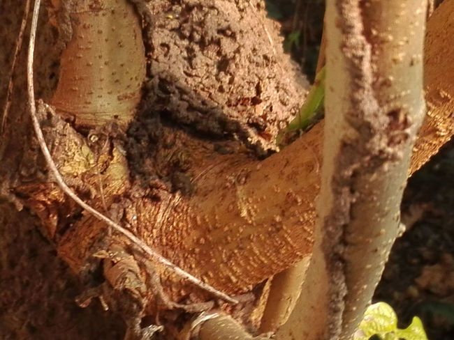 Animal Themes Animals In The Wild Close-up Day Honeycomb Nature No People Outdoors Tree Tree Trunk