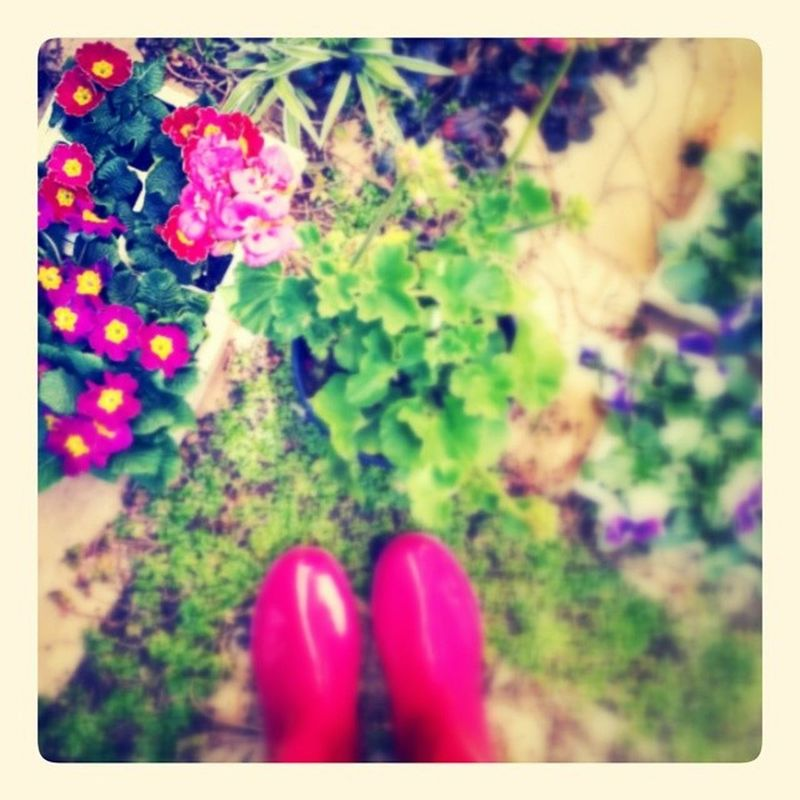 Sunday...part 2...gardening is made much more fun by wearing bright pink wellies... Wellingtons Hotpink Garden Flowers SundayAfternoons lookingDown snapseed filteredToDeath seedlings plants planting