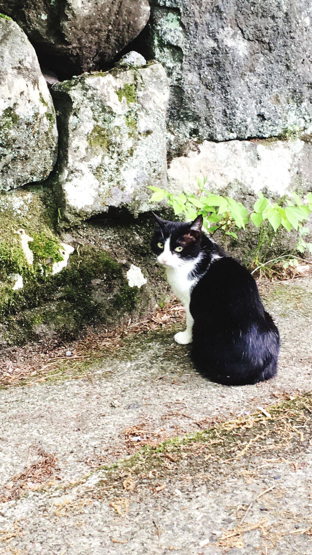 Cat Cat♡ Japan Photography Japan