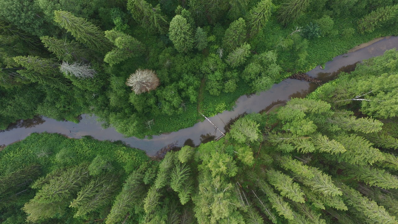 flying over forest of Russia Beauty In Nature Botany Dead Tree Over River River Curves Curves Wide Angle Hidden Places Hidden Nature Pine Woodland Elevated View Green Green Color Idyllic Landscape Nature No People Outdoors Rural Scene Scenics Tranquil Scene Tranquility Trees From Above River In Forrest