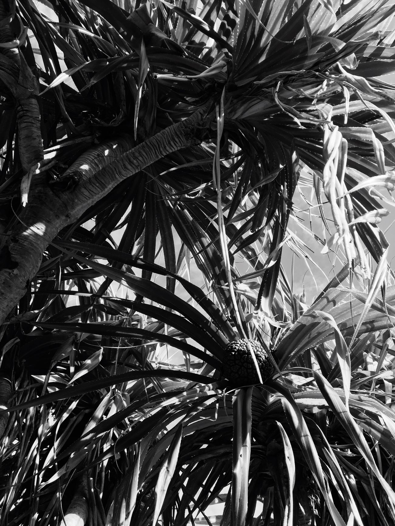 Nature Tree Palm Tree Beauty In Nature Leaf
