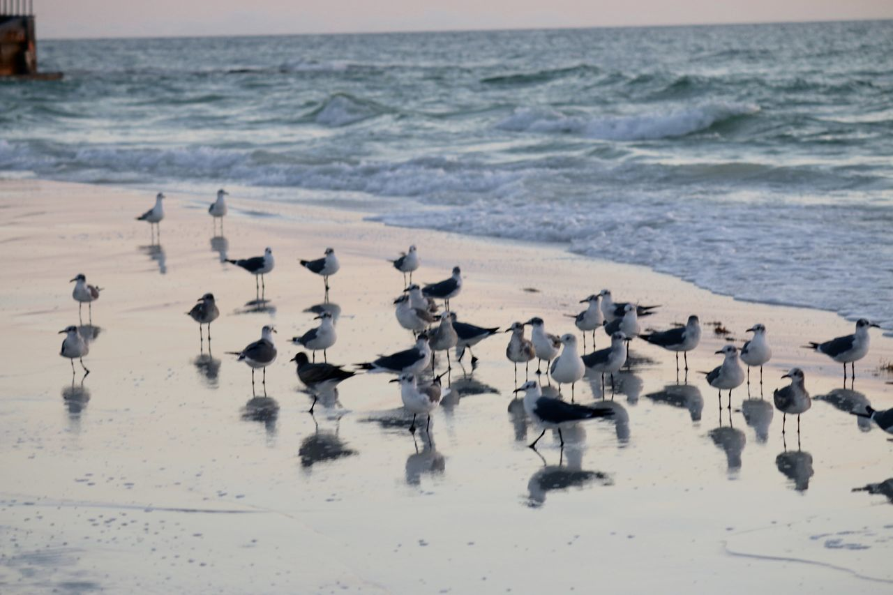 Animal Wildlife Beach Beauty In Nature Bird Coastline Day Flock Of Seagulls Horizon Over Water Idyllic Nature No People Ocean Outdoors Scenics Sea Sea Bird Seagull Shore Sky Tranquil Scene Tranquility Water Wave Wildlife