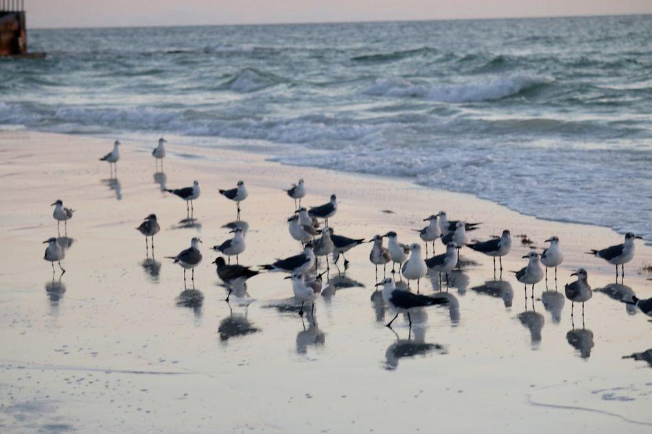 Animal Wildlife Beach Beauty In Nature Bird Coastline Day Flock Of Seagulls Horizon Over Water Idyllic Nature No People Ocean Outdoors Scenics Sea Sea Bird Seagull Shore Sky Tranquil Scene Tranquility Water Wave Wildlife