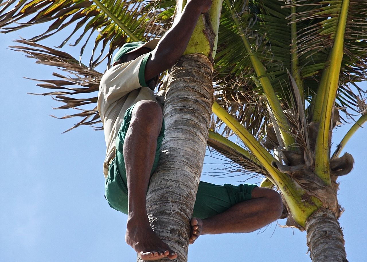 Adventure Club Beauty In Nature Blue Casual Clothing Climbing Close-up Enjoying Life Getting Inspired Growth Hello World Holiday Lifestyles Low Angle View Mauritius Nature Outdoors Palm Tree Part Of Sky Taking Photos Travel Tree Tree Trunk Miles Away Working Sommergefühle