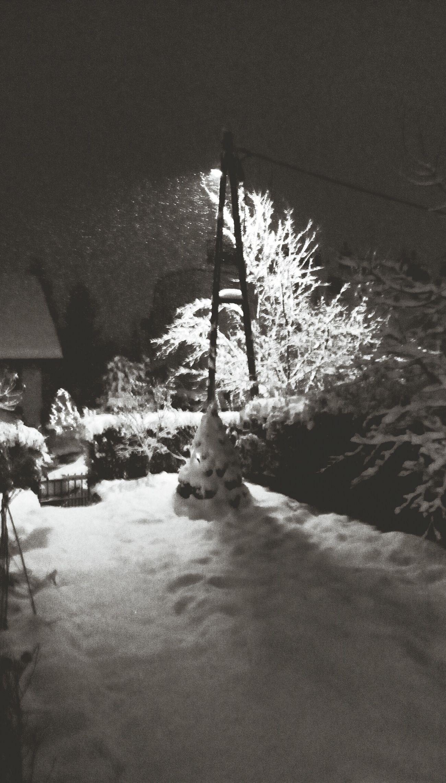 Gray Winter
