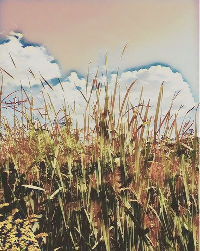 Nature Growth Field Tranquility Beauty In Nature No People Day Outdoors Scenics Landscape Sky Close-up