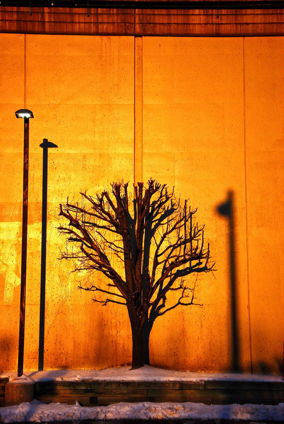 Morning Gold Tree Orange Color Growth No People Nature Day Outdoors Sunset Urbanphotography Historic City Beauty In Nature Pennsylvania Philly Whyilovephilly Urban Exploration Tranquil Scene Built Structure Trees And Wall Silhouette Silence Warmth Of The Sun Warm Scene Sunrise Golden Hour City Light And Shadow