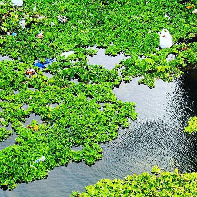 Plasticwaste Awareness Swatchbharat Cleaninessisnexttogodliness Rivers Waterpollution