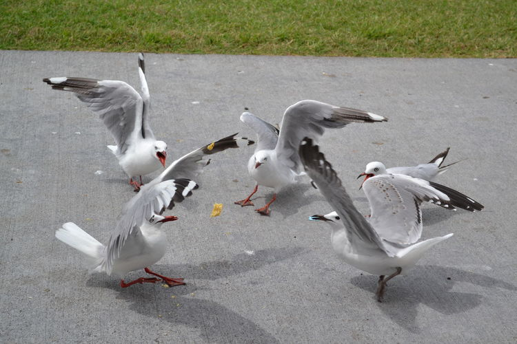 Mine!  Go For It Back Off!  Gulls Seagulls Seagulls In The City Dancers Dancing Performers At A Party Competition Time  Shadows Nature_perfection Feeding Animals Birds Of EyeEm  Chips CrumbsEVERYWHERE Photography In Motion Capture The Moment White Album