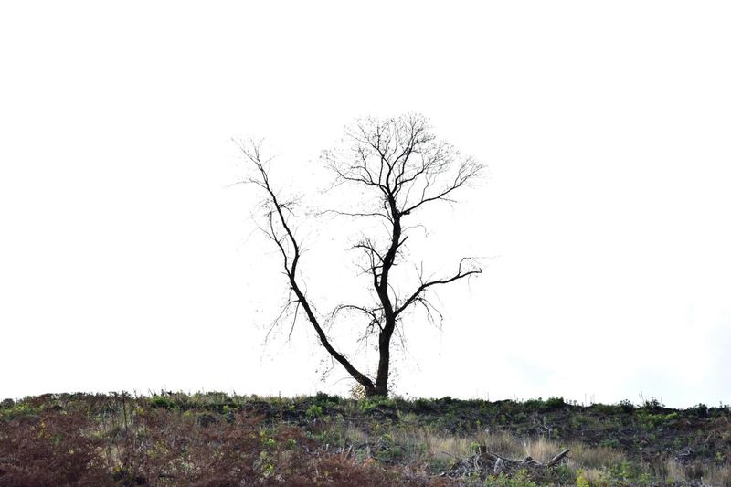 Landscape Photography Outdoors On Location Taking Photos Bare Tree Tree Nature Isolation Canoc Chase