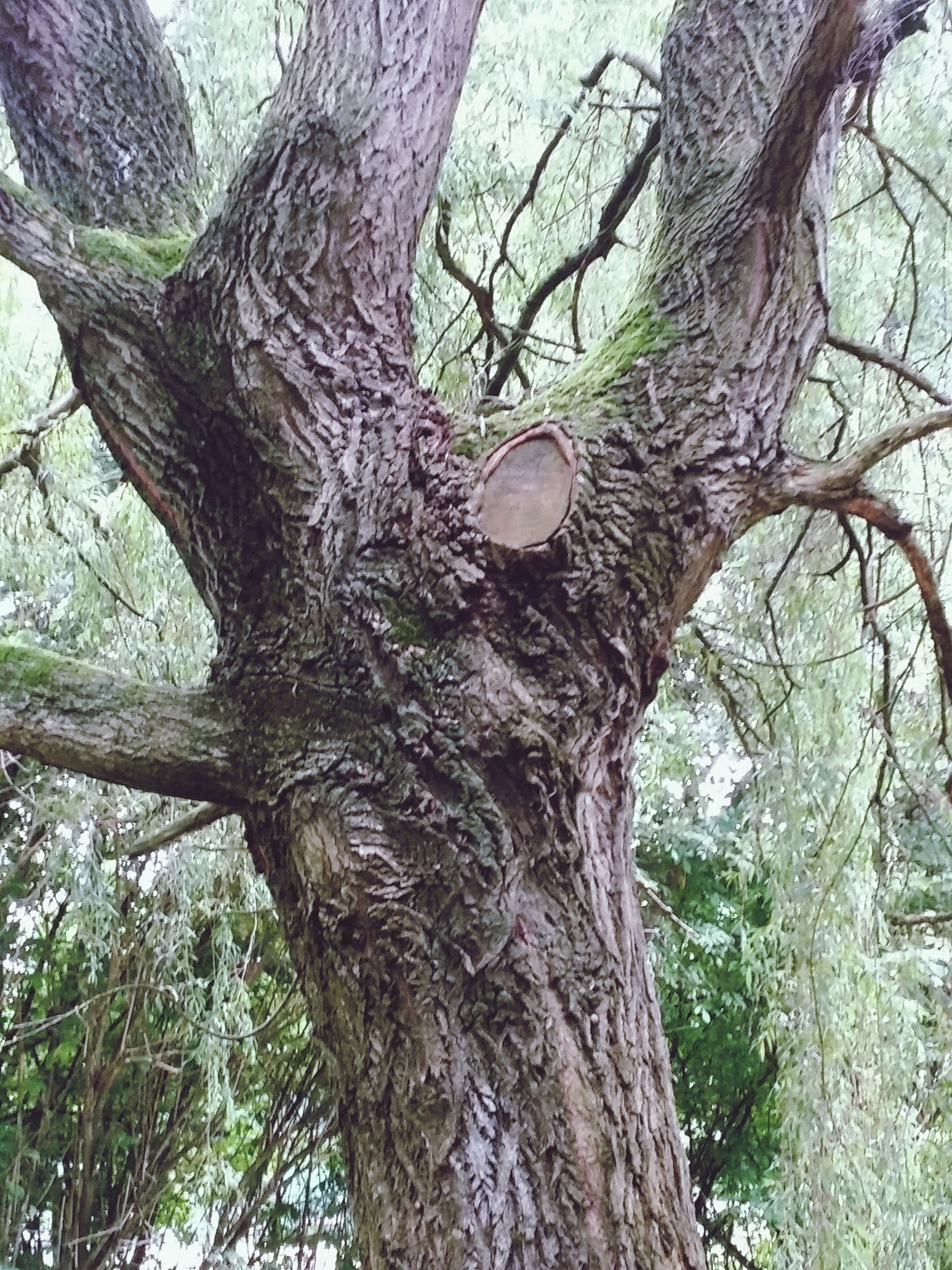 tree, tree trunk, branch, low angle view, growth, nature, bare tree, tranquility, bark, forest, day, wood - material, outdoors, beauty in nature, no people, sky, textured, woodland, close-up, sunlight