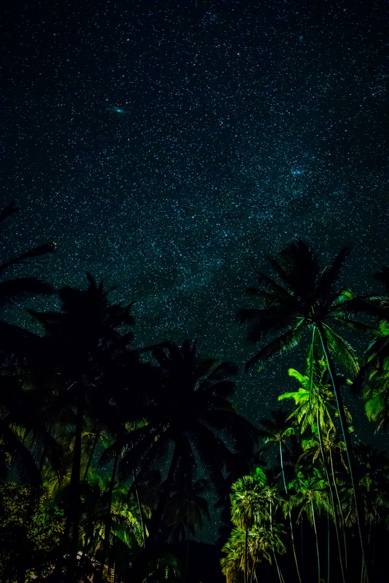 Long Exposure Sky Night Tree Star - Space Astronomy Nature Space And Astronomy Beauty In Nature Palm Tree Space Scenics Star Field Hawaiishots Hawaii Big Island Love From My Point Of View Big Island Hawaii Landscape_Collection Big Island Landscape_photography Milky Way