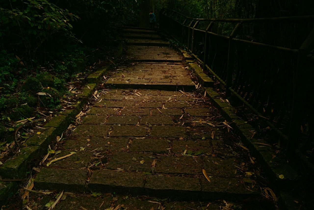 the way forward, nature, night, no people, outdoors, beauty in nature