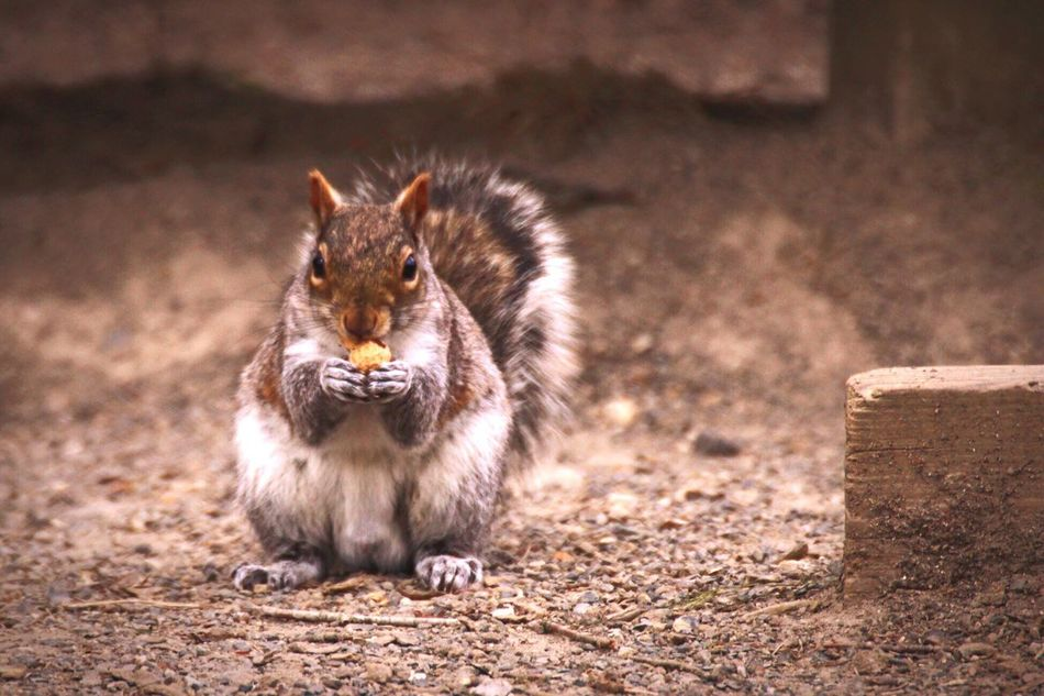 Nom nom nom 🐿 Animal Themes Mammal Sitting No People Animals In The Wild Domestic Animals Pets Outdoors Day Nature Close-up