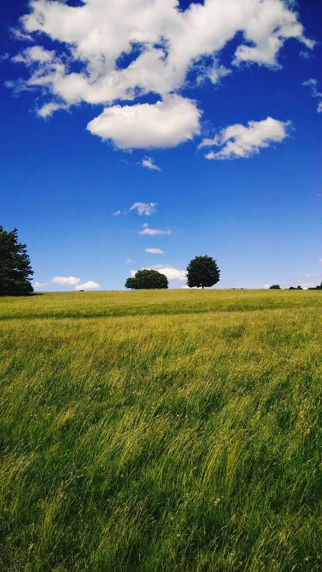 Landscape_photography Landscape Clouds Clouds And Sky Fieldscape Fields A Lone Hot Day Out Day Summer Summer Views Happy Place Relaxing Dreaming Nature's Diversities