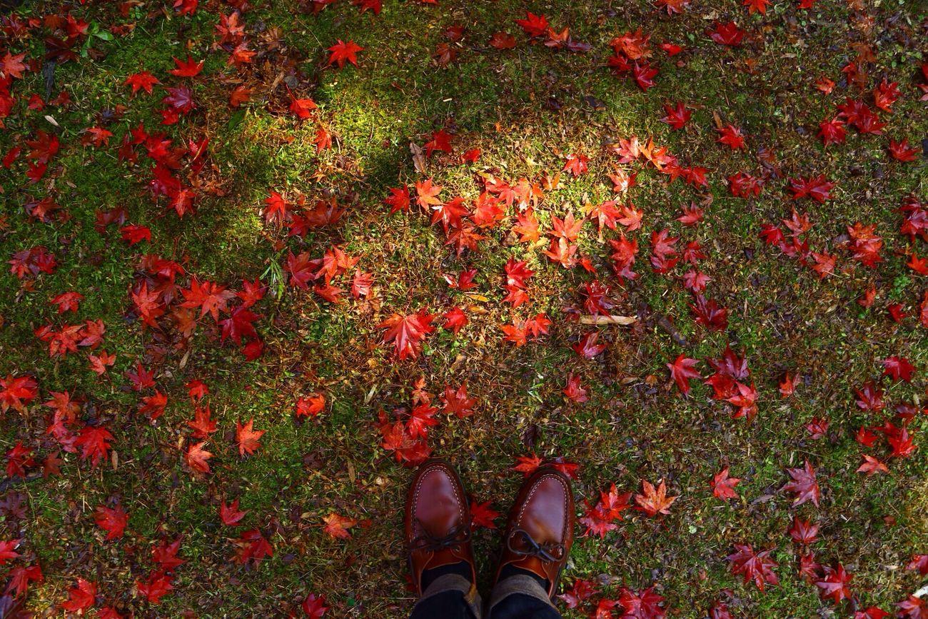 紅葉狩り Autumn Good Times